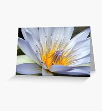 Spanning Waterlilly Greeting Card