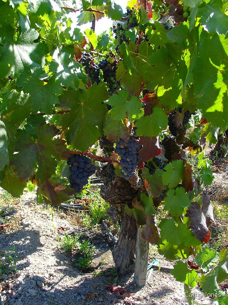 Old Vine by Cathy Jones