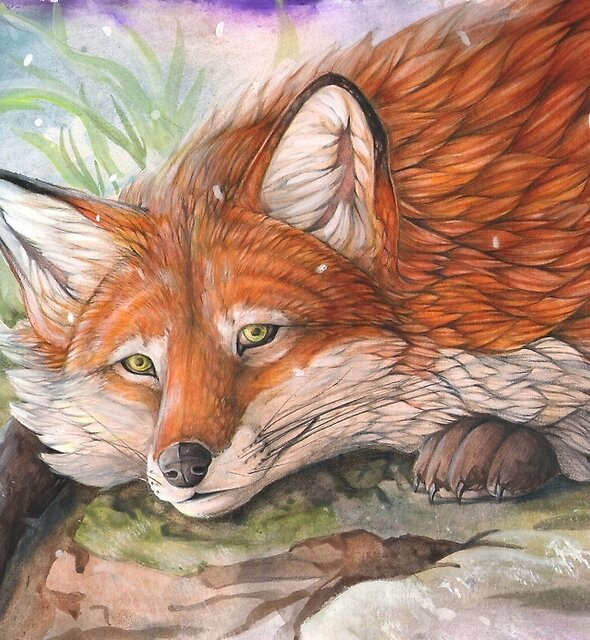 Winter fox by Dawn Paws