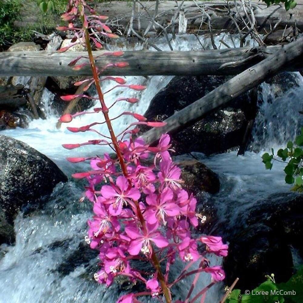Taggert Creek by © Loree McComb