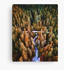 forest in the yosemite  Canvas Print