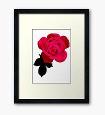 Big Beautiful Pink Rose Framed Print