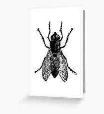 BUG, House Fly, Blue Bottle, THE FLY, FLY, House Fly, Insect Greeting Card