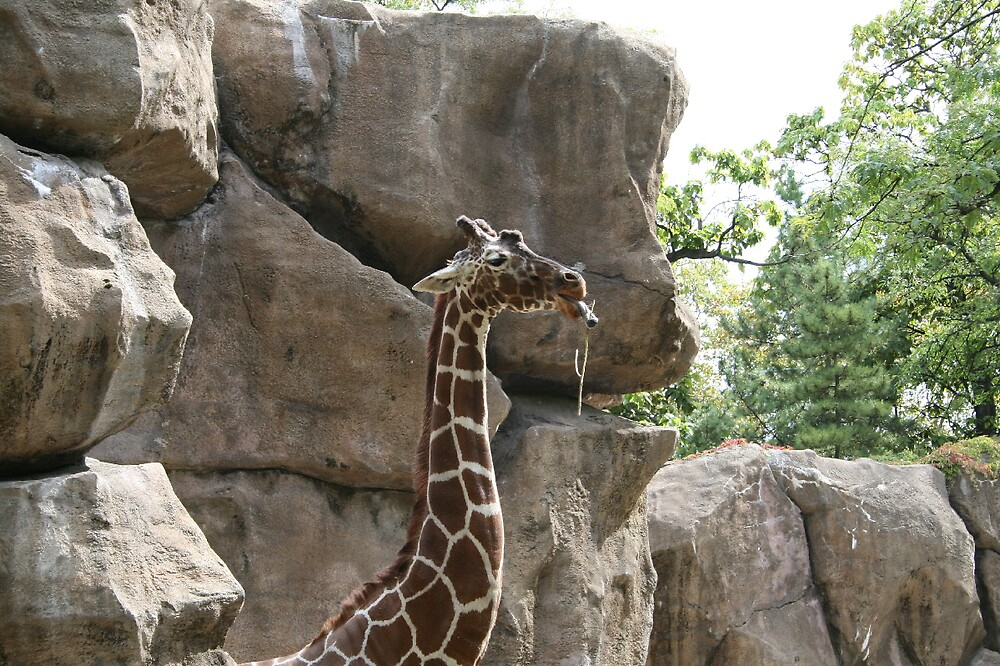 Giraffee at the Philly Zoo by Gabrielle Gigliotti