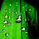 few rain drops by AnaBanana