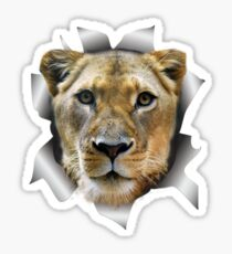 Lioness of Africa Sticker