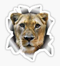 Lioness of Africa Sticker