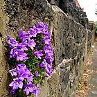 Another Blossom in the Wall by Vanessa  Warren