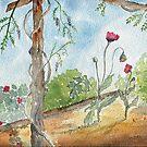 Camano Rubies by Diane Hall