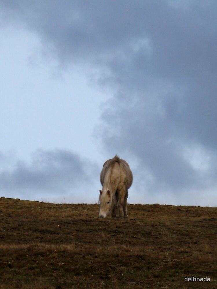 horse by delfinada
