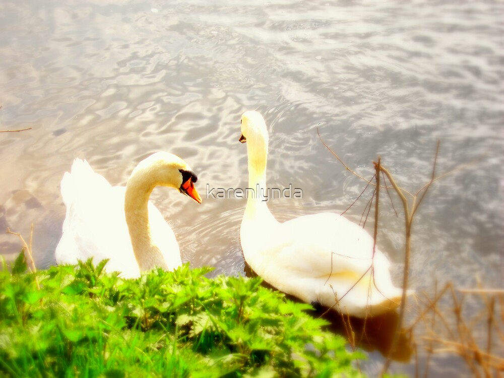 Swans in Soft Glow by karenlynda