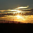 Glorious Sunset by Cynthia48