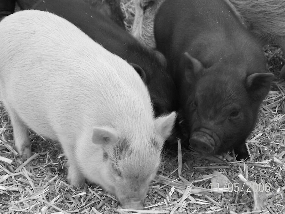 farm animals by cher