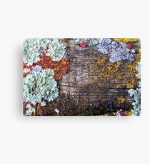 Lichen Playground Canvas Print