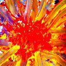 Radiant Joy by Sheila Van Houten