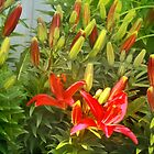 Red Lilies by Nadya Johnson