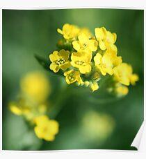 As Precious As Gold Poster
