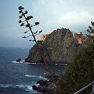 Cinque Terre Path by michelle123