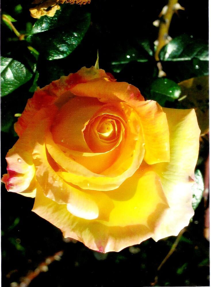 """""""Golden Beauty. . ."""" by lurline"""