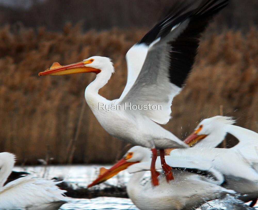 Taking Flight - White Pelican by Ryan Houston