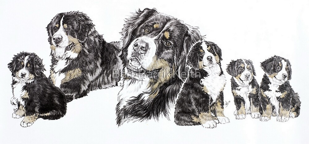 Growing Up Bernese Mountain Dog by BarbBarcikKeith
