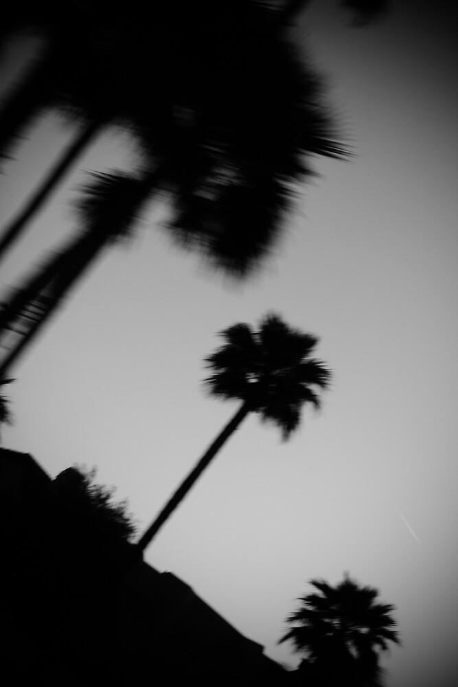 Palm Trees by Janina