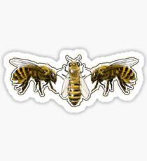 BeeMan! Beeeeees!!! Sticker