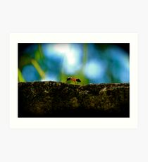 Small Life ... Big World Art Print