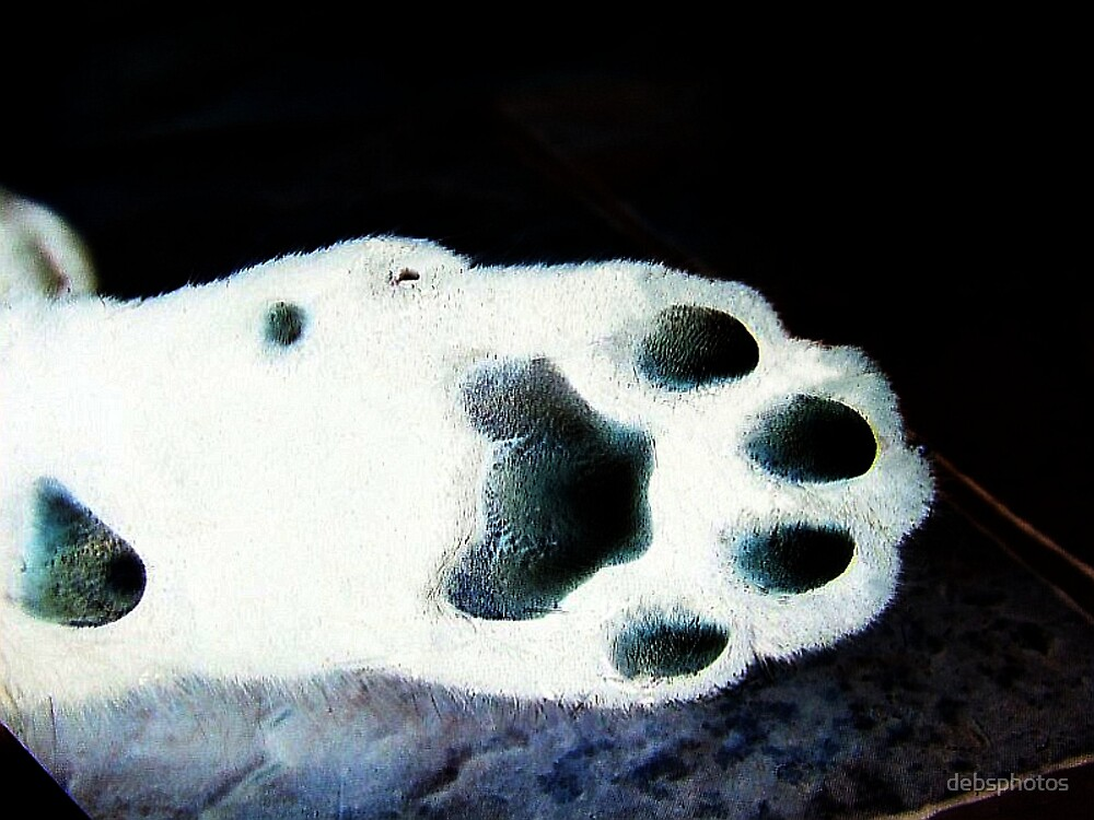 Glowing Paw... by debsphotos