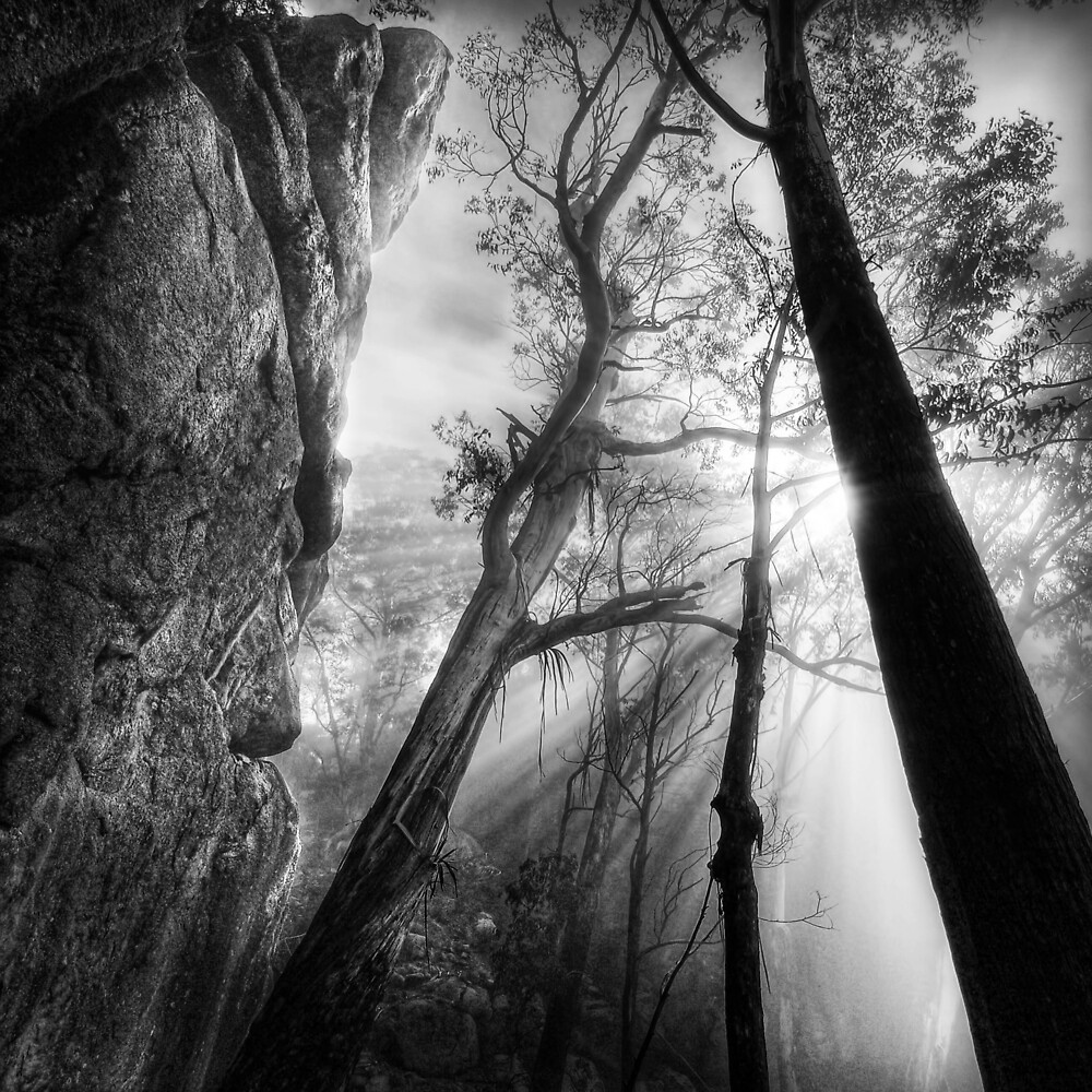 Cliff and forest, Mount Buffalo by Kevin McGennan