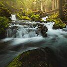Woodland Cascades by Brandt Campbell