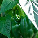 Mutant Pepper by Amy Dokken