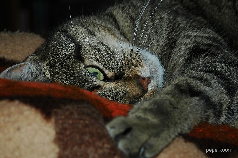 Speedy Cat by peperkoorn