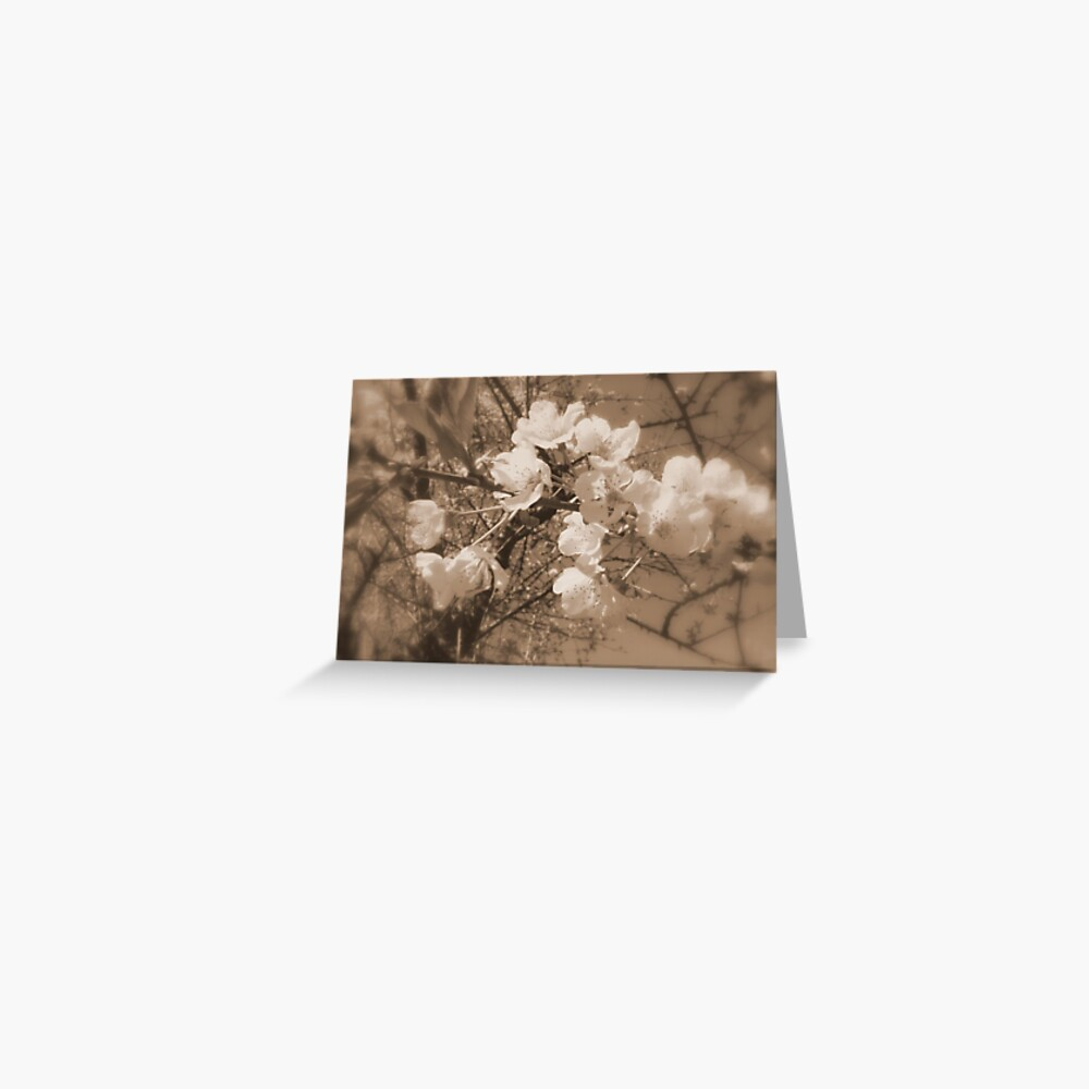 cherry blossoms in the sky, sepia Greeting Card