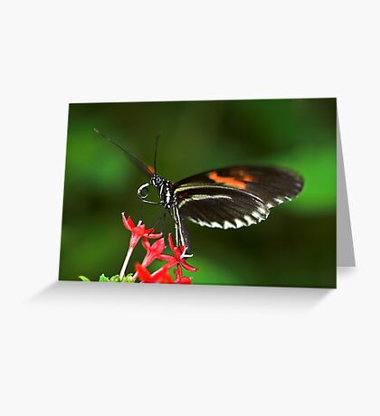 About to Take Off Greeting Card