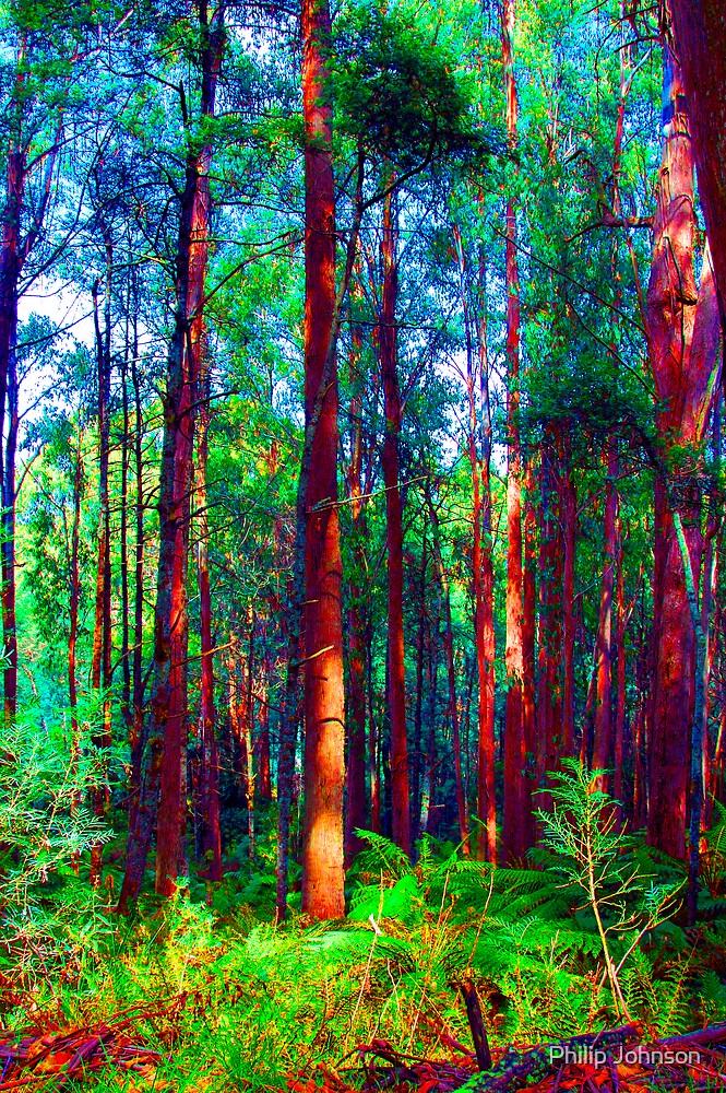 Psychedelic RainForest Series #1 - Yarra Ranges National Park , Marysville Victoria Australia by Philip Johnson