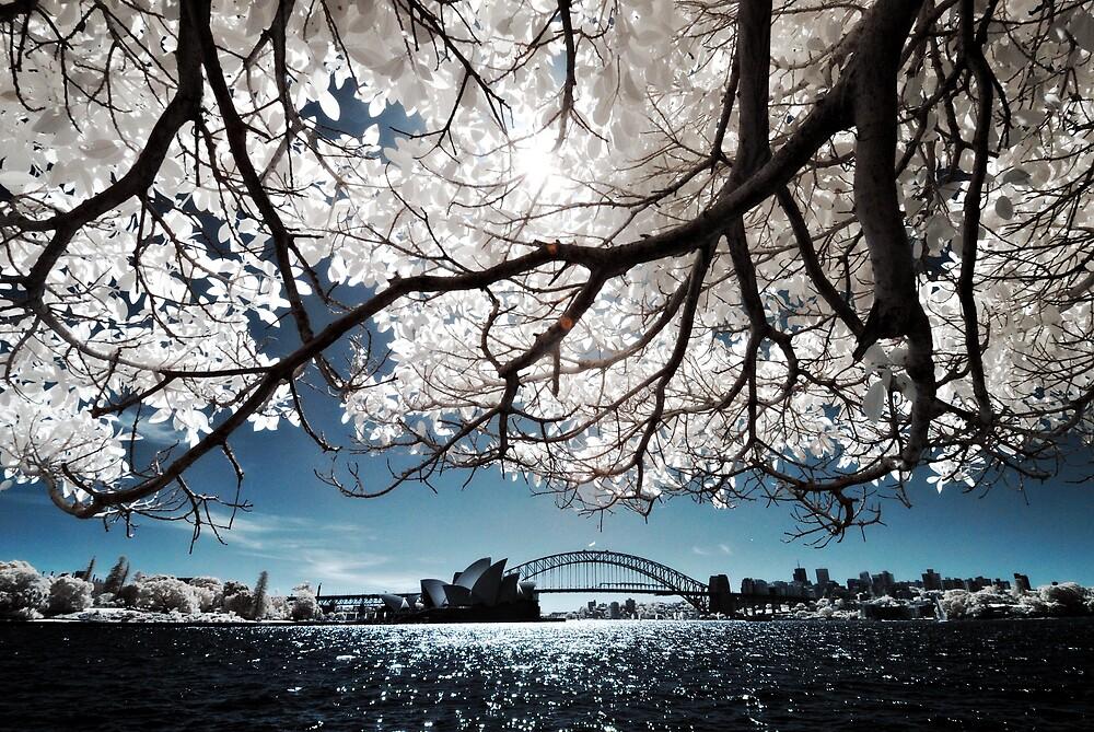 IR Sydney Harbour by Alex Lau
