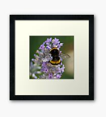 My Bumble Bee Framed Print