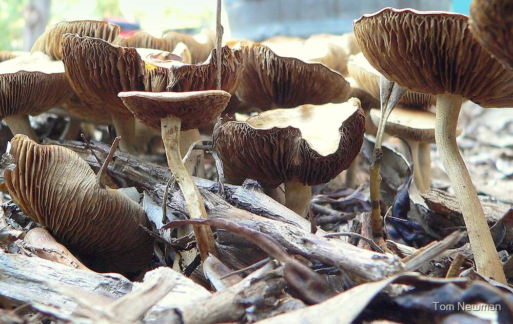Fungi IV by Tom Newman