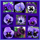 All Blues - Summer Flowers Collage von BlueMoonRose