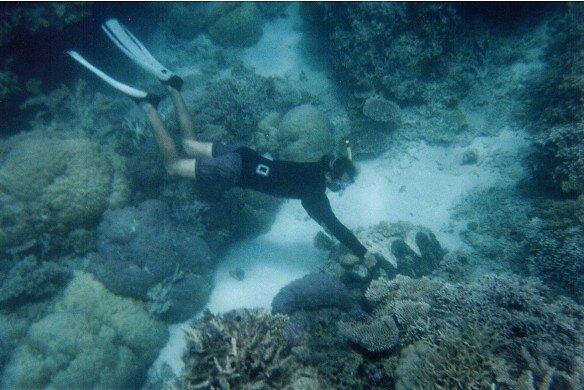 Great Barrier Reef by retsilla