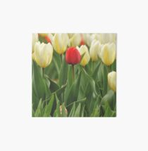 One Red Tulip with White Tulips Art Board