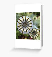 Poppy Pod Brilliance Greeting Card
