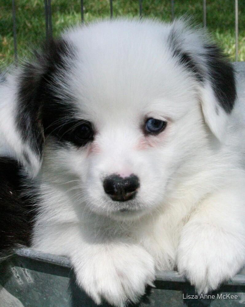 Pembroke Welsh Corgi puppy by Lisza Anne McKee