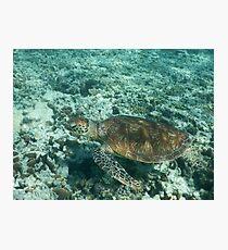 Green sea turtle Photographic Print