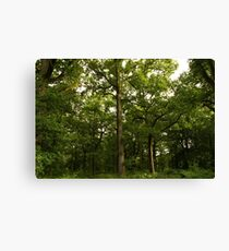 English Forest Canvas Print