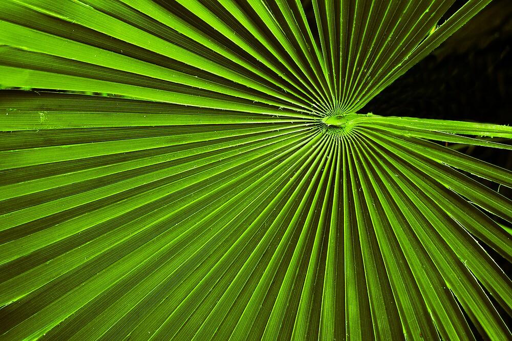 Botanic by Eddy Charlton