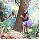 Enchanted Forest by Barbara  Brown