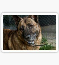Butch the Friendly Dog Sticker
