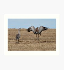 Mating Dance_2 Art Print